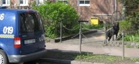 fot. Straż Miejska w Gdańsku