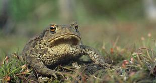 Fot. Wikipedia/Marek Szczepanek